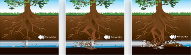 Trees That Cause Plumbing Issues to Your Home
